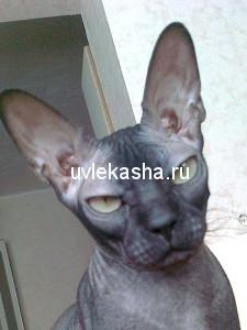 доченька-плюша-руссо-05.11.2007