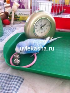 synochek-koko-russo-2014-e1450934322478-224x300