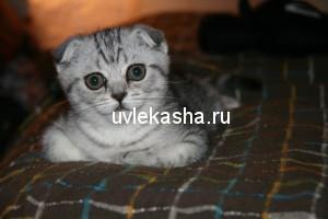 доченька-руна-руссо-2010