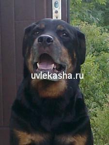 сыночек-рэй-руссо-26.03.2000